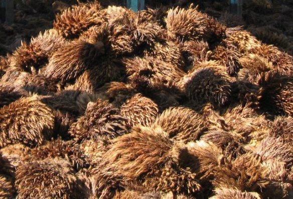 tandan kosong kelapa sawit, sudah lepas buahnya